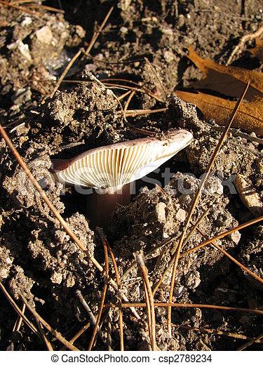 forest mushroom - csp2789234
