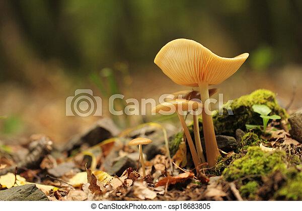 forest mushroom - csp18683805