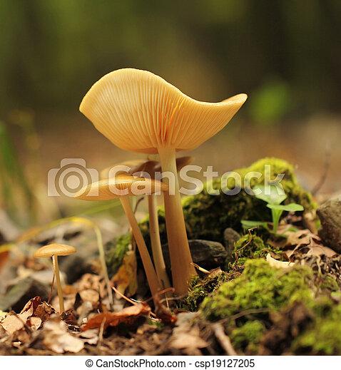 forest mushroom - csp19127205