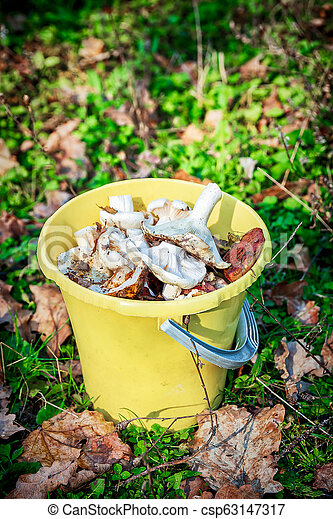 Forest mushrooms in a yellow bucket. - csp63147317