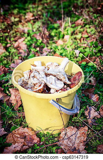 Forest mushrooms in a yellow bucket. - csp63147319