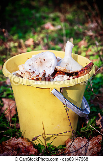 Forest mushrooms in a yellow bucket. - csp63147368