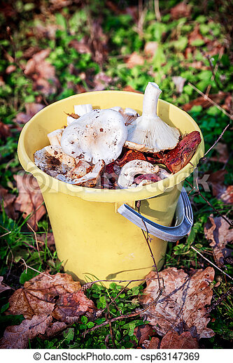 Forest mushrooms in a yellow bucket. - csp63147369