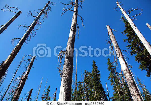 Forest of Dead Trees - csp2380760