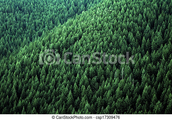 Forest of Pine Trees - csp17309476