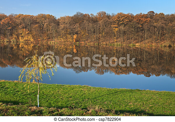 forest on a lake - csp7822904