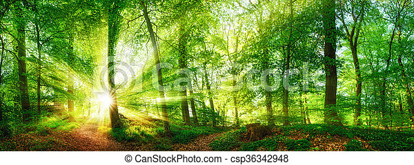 Forest panorama with the sun shining through the foliage - csp36342948