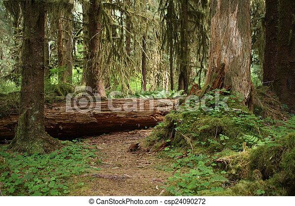Forest Path - csp24090272