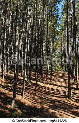 Forest Path - csp8114226