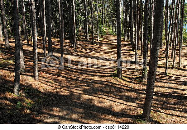 Forest Path - csp8114220