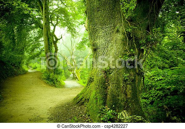 Forest Pathway - csp4282227