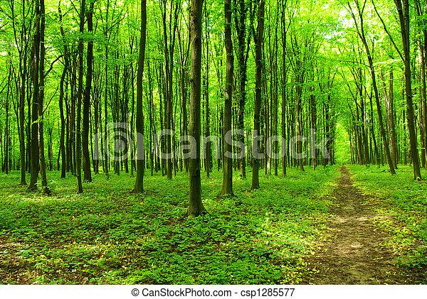 forest - csp1285577