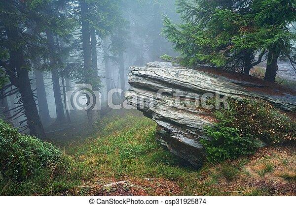Forest - csp31925874