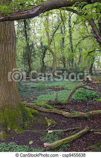 Forest - csp9455638