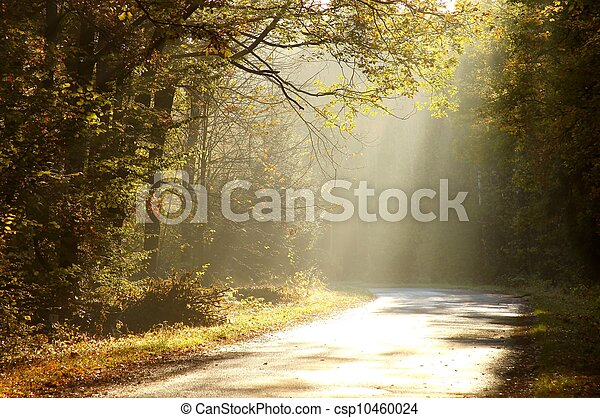 Forest road in autumn morning - csp10460024