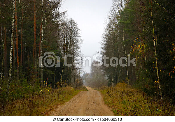 Forest road on a foggy autumn morning. - csp84660310