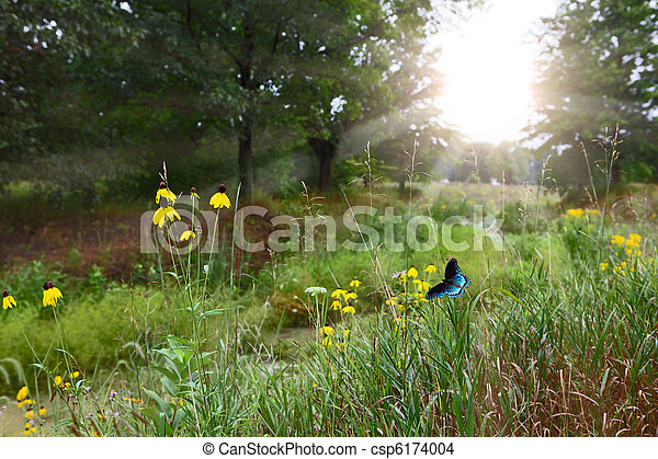Forest Scene - csp6174004