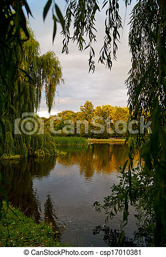 Forest scene with lake and trees - csp17010381