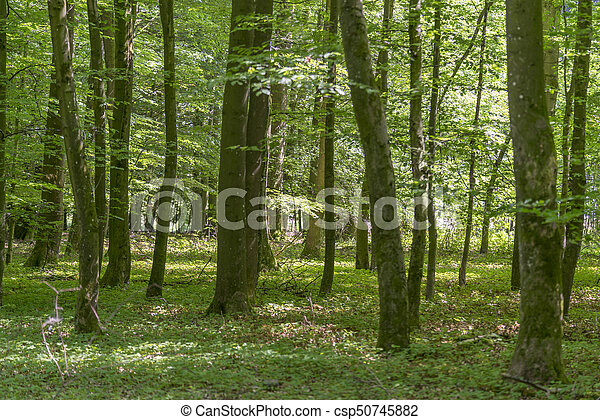 forest scenery at summer time - csp50745882