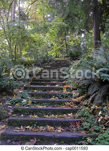 Forest Steps - csp0011593