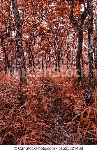 forest - csp25321460