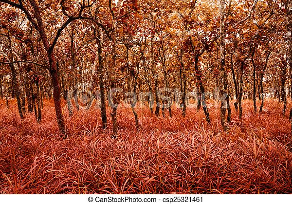 forest - csp25321461