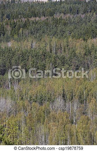 Forest - csp19878759