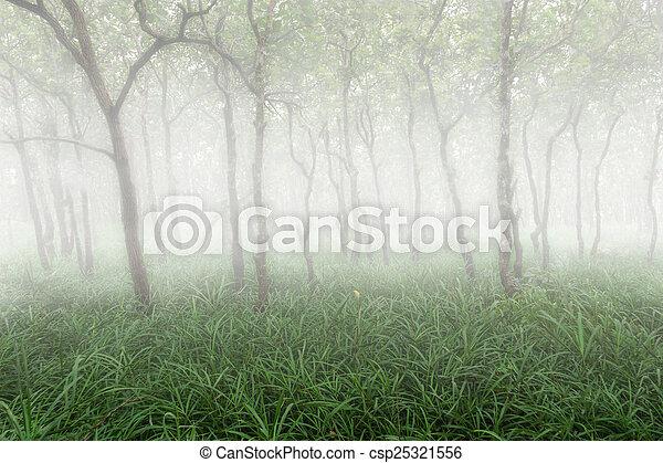 forest - csp25321556