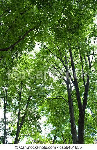 forest - csp6451655