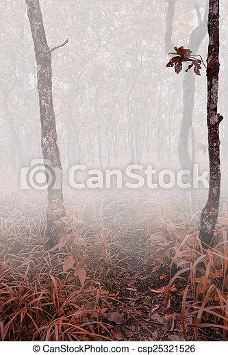 forest - csp25321526