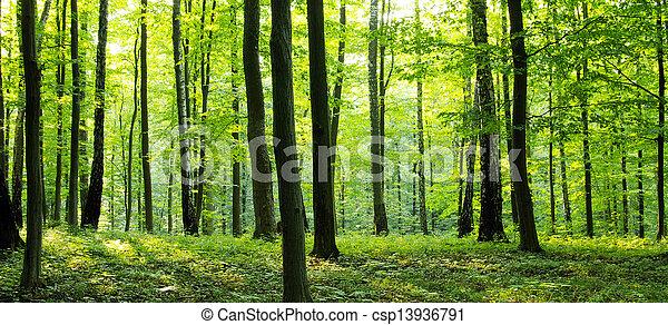 Forest - csp13936791