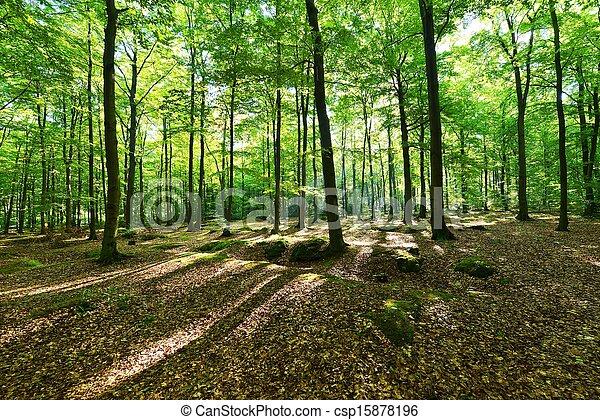 Forest - csp15878196