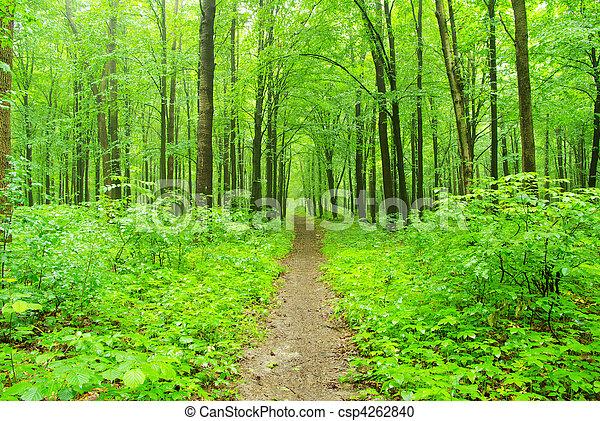 forest - csp4262840
