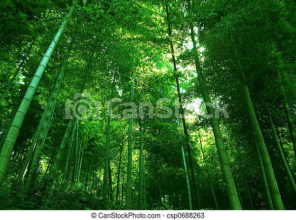 forest - csp0688263