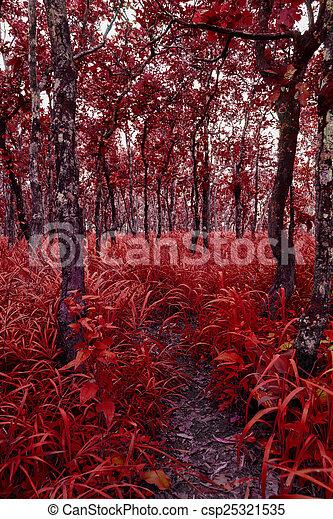 forest - csp25321535