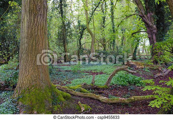 Forest - csp9455633