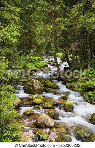 Forest Stream in Tatra Mountains - csp2300232