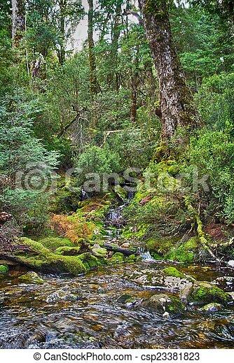 Forest stream - csp23381823
