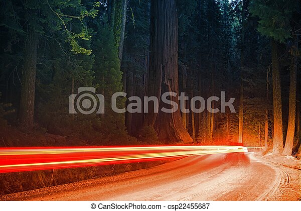 Forest Traffic at Night - csp22455687