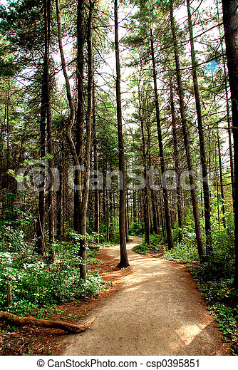 Forest trail - csp0395851