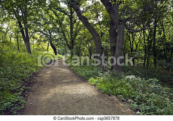 Forest Trail - csp3657878