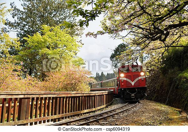 Forest train - csp6094319