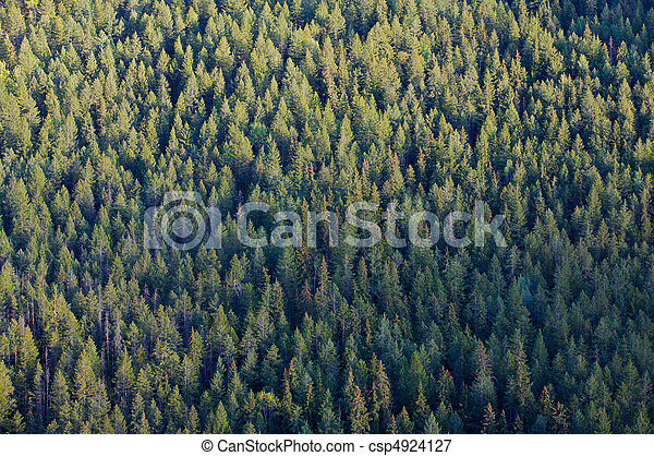 Forest tree tops - csp4924127
