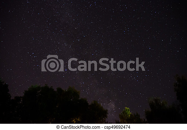 Forest trees under Milky Way in night sky - csp49692474