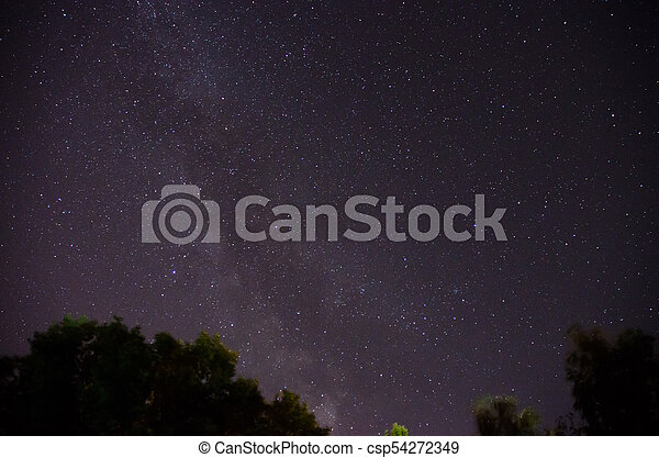 Forest trees under Milky Way in night sky - csp54272349