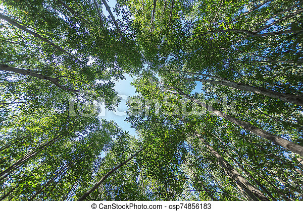 Forest trees with sunlight of nature - csp74856183