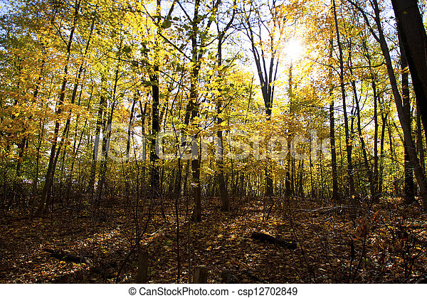 forest with autumn trees - csp12702849