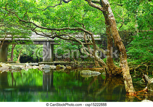 Forest with lake - csp15222888