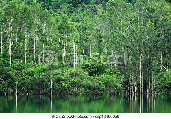 forest with lake - csp13480058