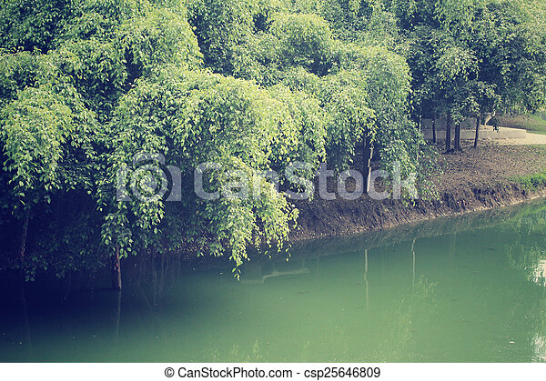 Forest with lake - csp25646809